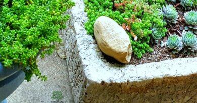hypertufa trough - the ancient look