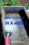 Can you leach your new hypertufa pot in a week? Works for me!