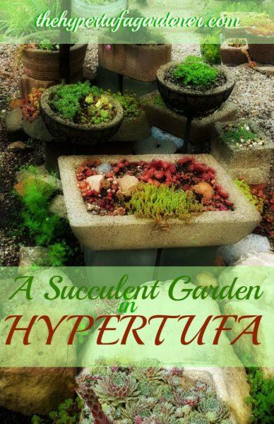 A Succulent Garden - THG