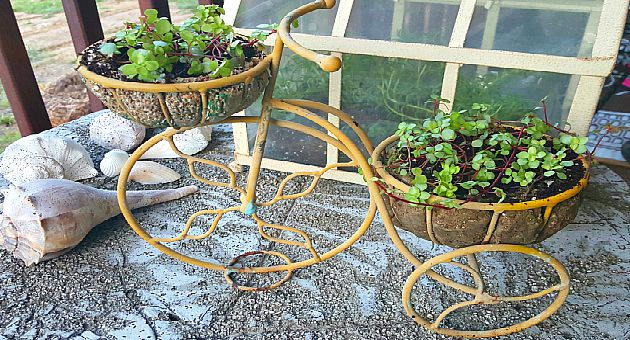 Bike with Plants - The Hypertufa Gardener