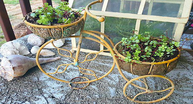 Bike with Plants - The Hypertufa Gardener