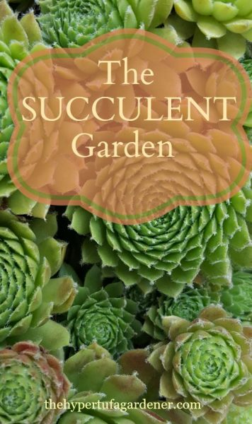 Drought Worthy Plants - The Succulent Garden