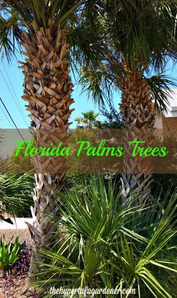 FloridaPalmTrees-TheHypertufaGardener