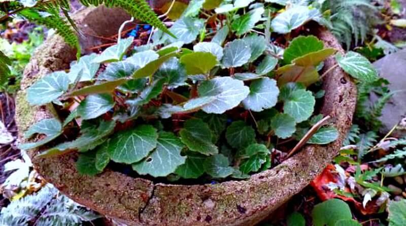 Timeless-Appeal of Tufa -The-Hypertufa-Gardener(1)