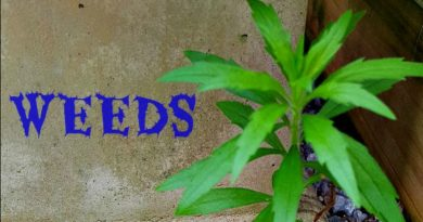 Weeds - I have an endless supply