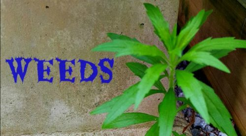Weeds – I Have An Endless Supply