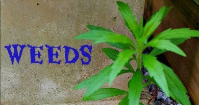 Weeds in the Garden - The Hypertufa Gardener