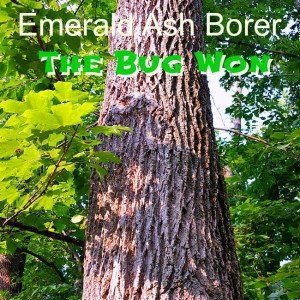 13 Large Old Trees lost to the Emerald Ash Borer