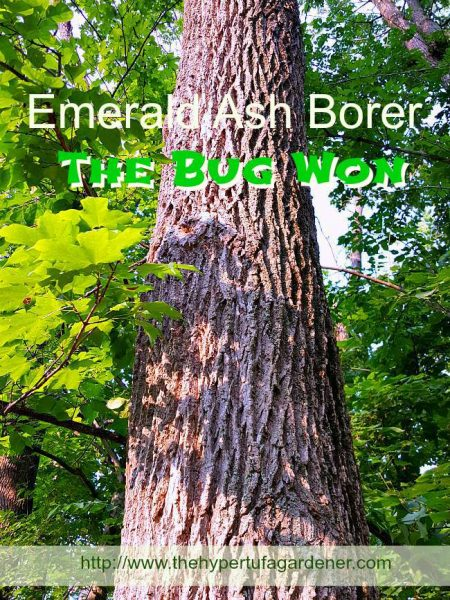 2Lost Our Trees To The Emerald Ash Borer2 -The Hypertufa Gardener