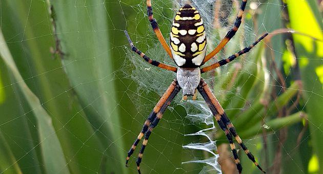 Arachnophobia- The Hypertufa Gardener