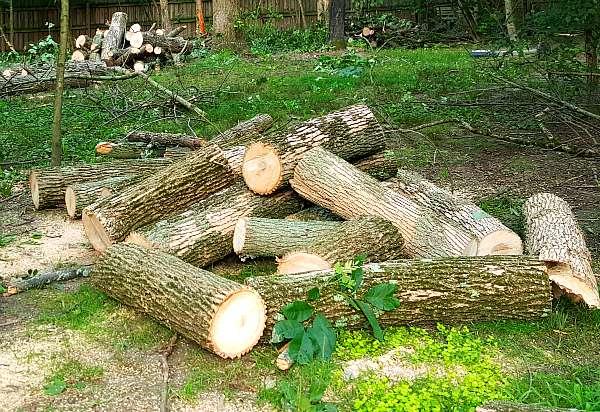Ash firewood - The Hypertufa Gardener