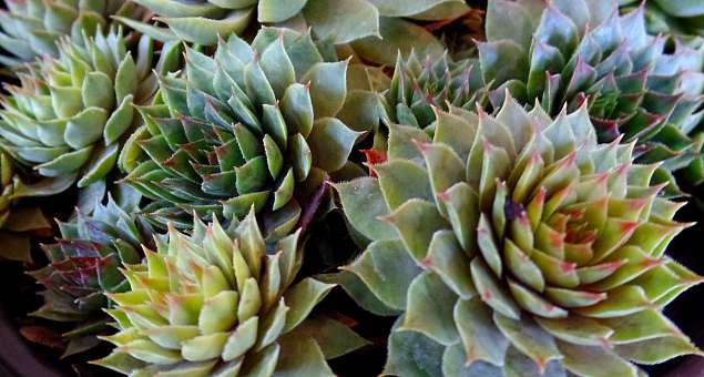 Gotta Have It! Succulents On Sale