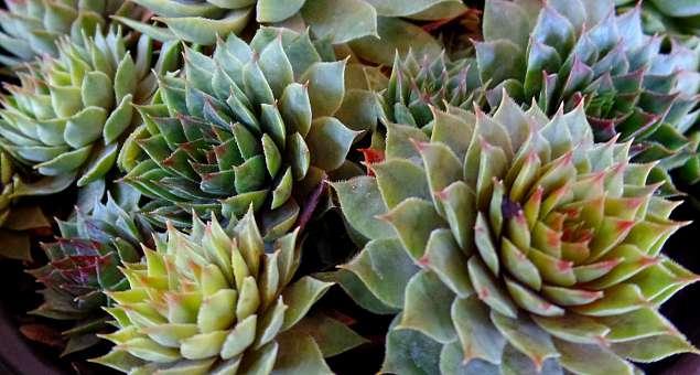 Gotta Have It! Succulents On Sale