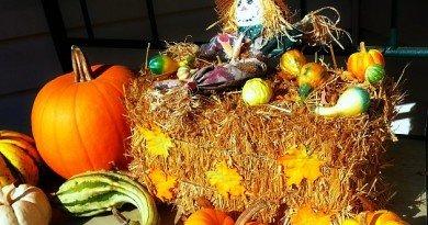 Last-Trip-Pumpkin-Patch 2 - The-Hypertufa-Gardener