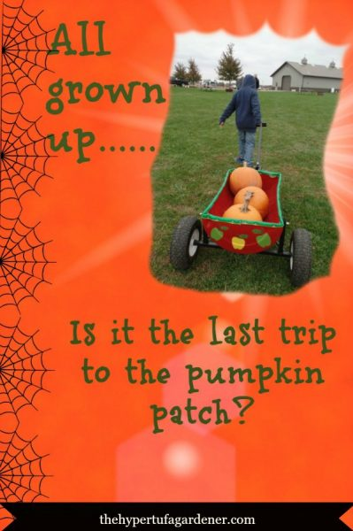 Last-Trip-Pumpkin-Patch - The Hypertufa Gardener