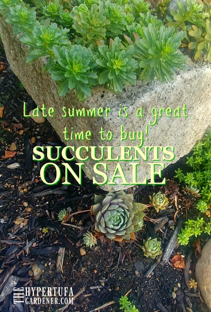 Late summer is a great time to buy Succulents on Sale