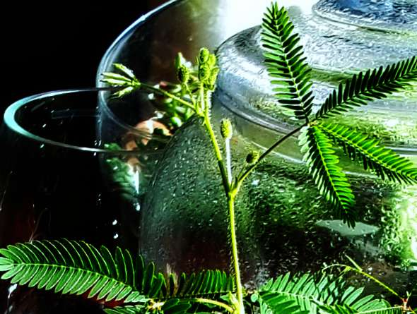 Let's Try Terrariums This Winter For Indoor Gardening 2