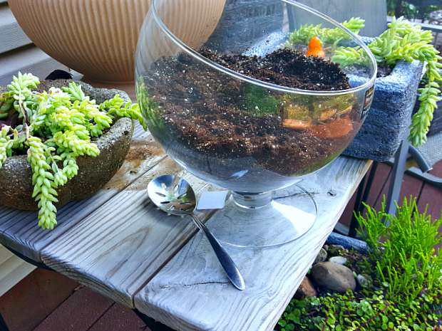 Let's Try Terrariums This Winter For Indoor Gardening 4