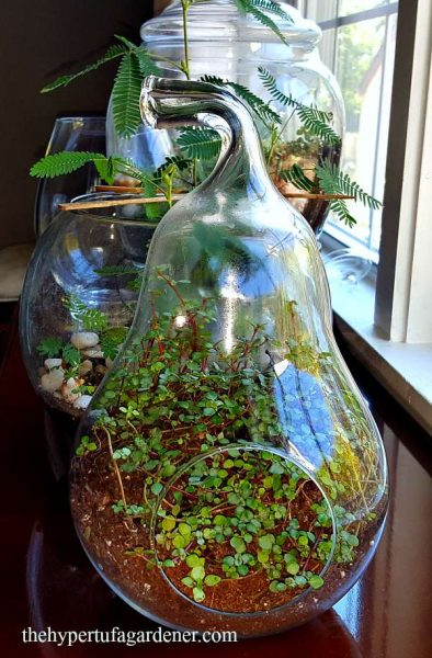 Let's Try Terrariums This Winter For Indoor Gardening 6