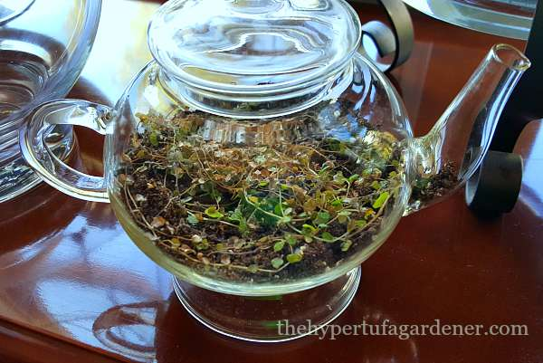 Let's Try Terrariums This Winter For Indoor Gardening 7