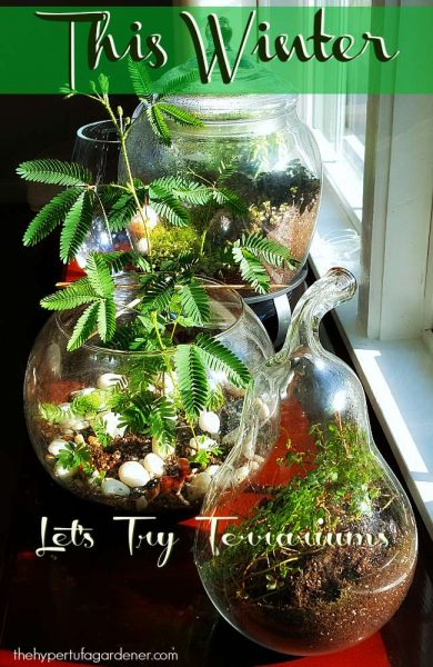 Let's Try Terrariums This Winter For Indoor Gardening