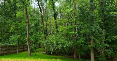We Lost Our Trees to the Emerald Ash Borer