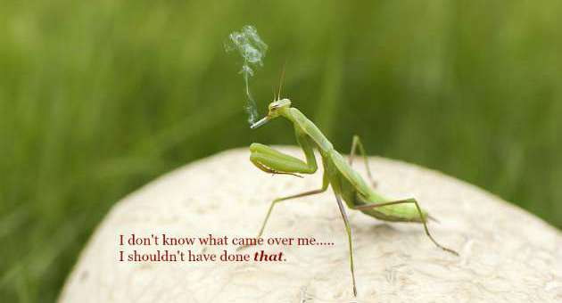 Smoking After Mating - Praying Mantis - The Hypertufa Gardener