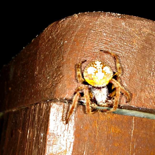 Web Eater - The Hypertufa Gardener