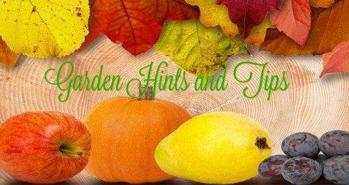 Monday: Garden Hints & Tips