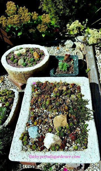 Hypertufa in Winter - the Hypertufa Gardener