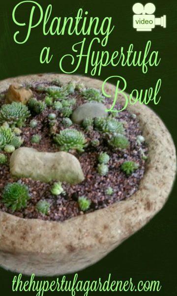 Planting-Hypertufa-Bowl-The-Hypertufa-Gardener