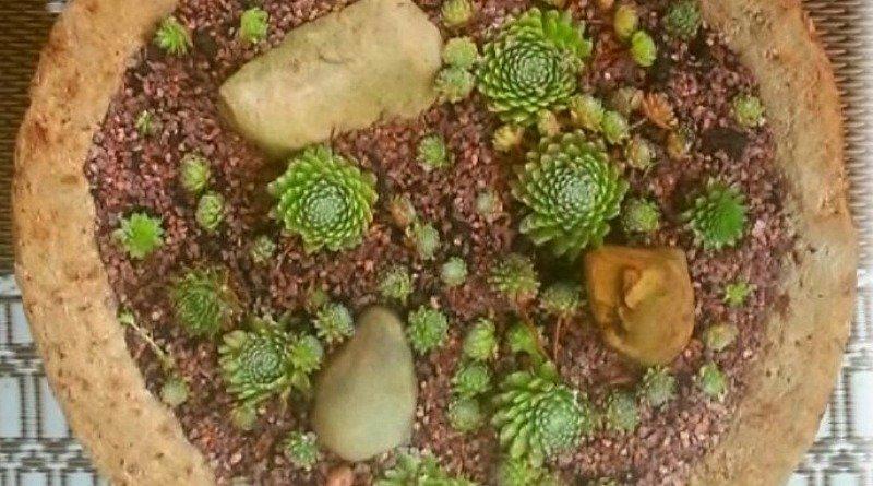 Planting a Hypertufa Bowl