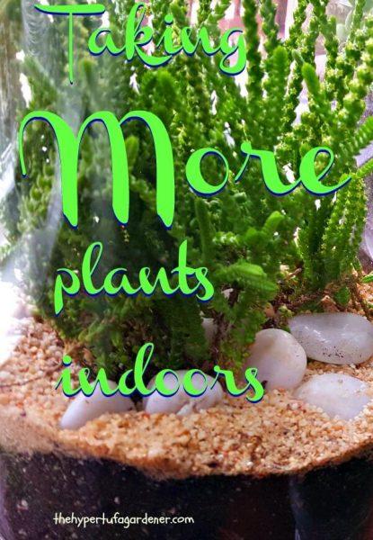 Taking More Plants Indoors= The Hypertufa Gardener