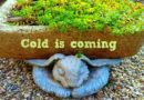 What About Hypertufa In Winter?