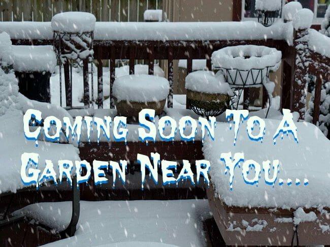Where do I put my Hypertufa in winter -The Hypertufa Gardener