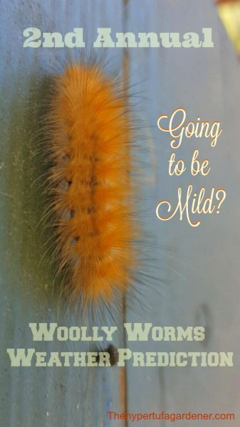 Woolly-Worms-Weather-Prediction from The Hypertufa Gardener - Copy