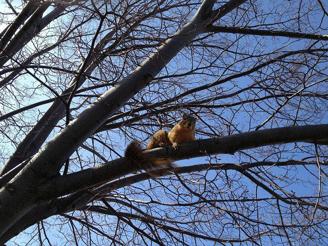squirrel waiting for a chance to dig - The Hypertufa Gardener