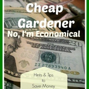 Hints and Tips to Save Money In The Garden - The Hypertufa Gardener