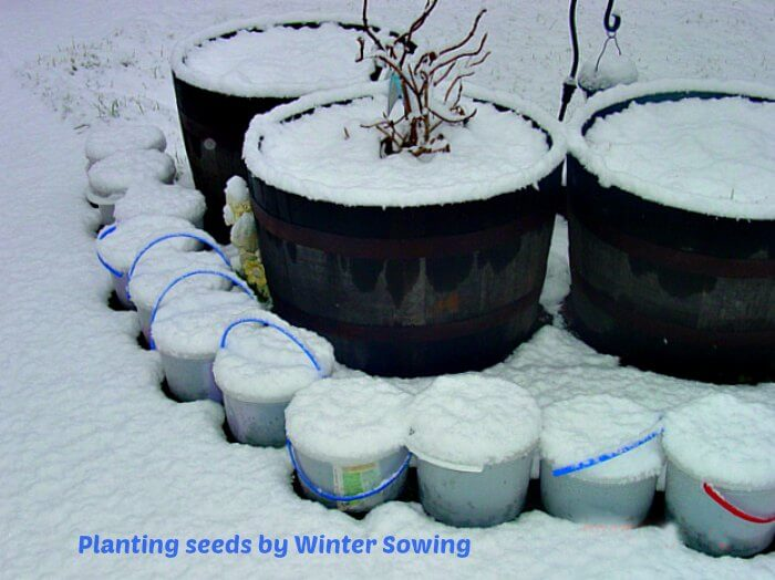 image of ice cream box planters used in wintersowing