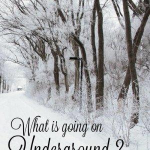 Ever wonder what's down there Under the garden soil - The Hypertufa Gardener
