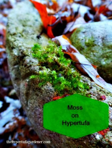 Growth-Moss-Hypertufa-Gardener