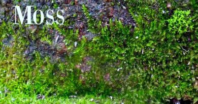 Moss growing on stone and hypertufa