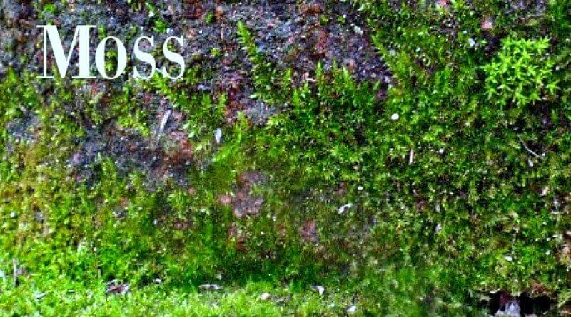 Moss growing on stone and hypertufa