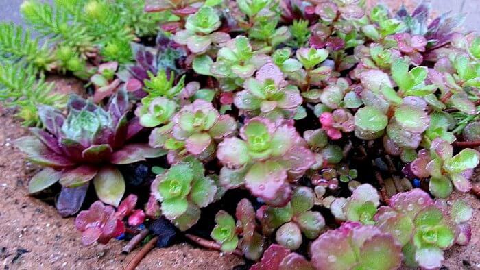 Remembering Color in the Garden - The Hypertufa Gardener