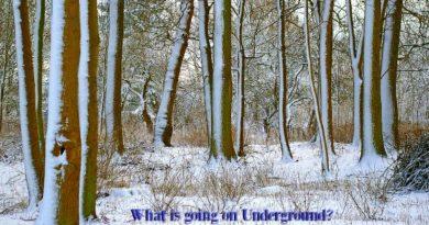What's going on under the garden soil?