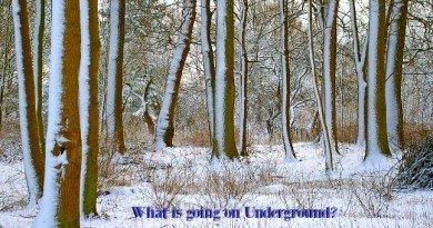 What's Going On Under The Garden Soil - The Hypertufa Gardener
