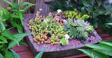 Wistful Wednesday Remembering My Garden - The Hypertufa Gardener
