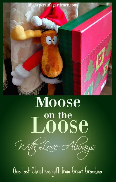 With Love Always- The Moose on the Loose - The Hypertufa Gardener