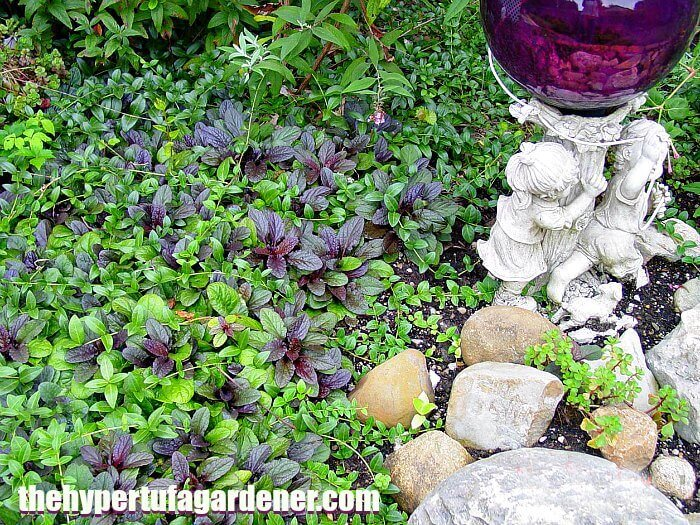 Ajuga reptans with gazing globe - the hypertufa gardener
