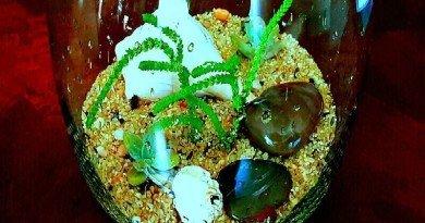 Under The Sea: Crassula Muscosa In My Succulent Terrarium